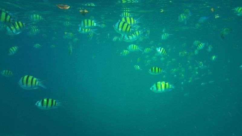 Surin Island 22