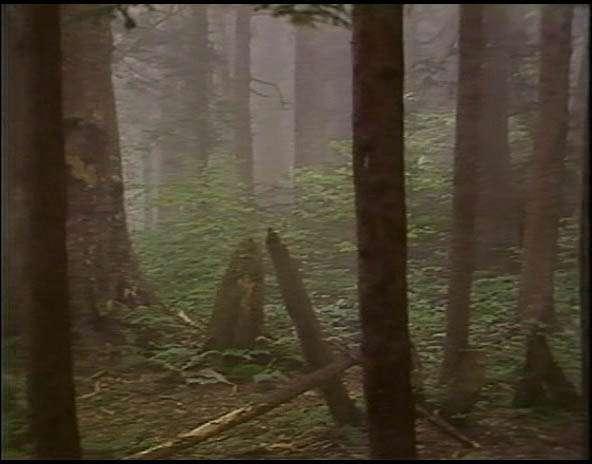 0occ Bill Viola   Hatsu Yume (1981)
